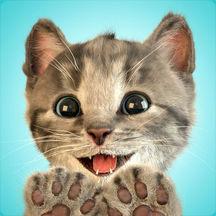 Little Kitten - My Favorite Cat