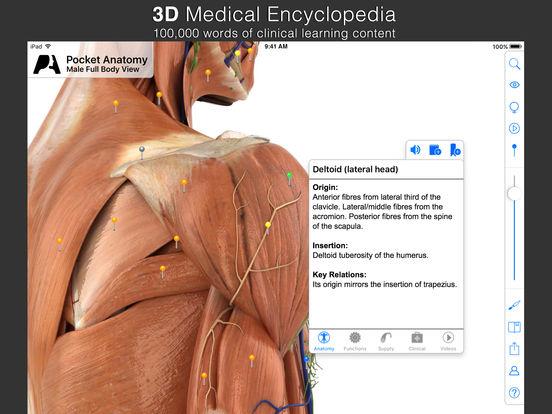 Pocket Anatomy - Interactive 3D Human Anatomy and Physiology. Screenshot