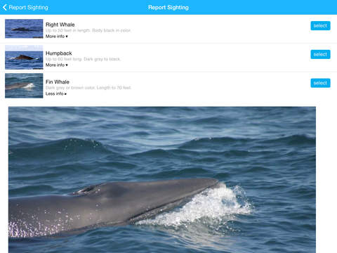 Whale Alert - Reducing Ship Strikes - Worldwide Screenshot