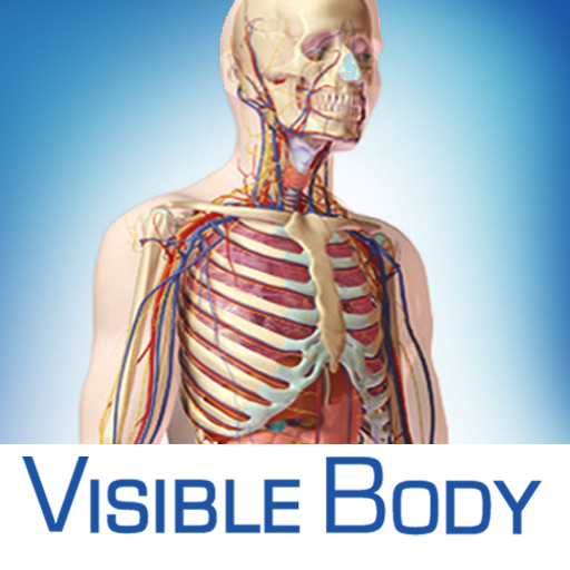 Visible Body for iPad 2 3D Human Anatomy Atlas | iPhone