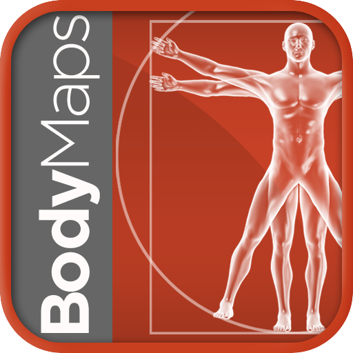 Healthline Body Maps – Male 3D Human Anatomy Reference