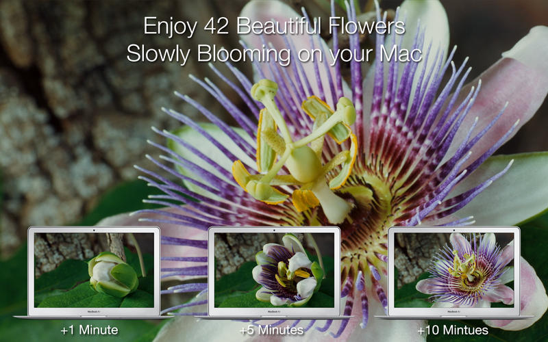 Magic Flowers - Living Wallpaper & Screen Saver Screenshot