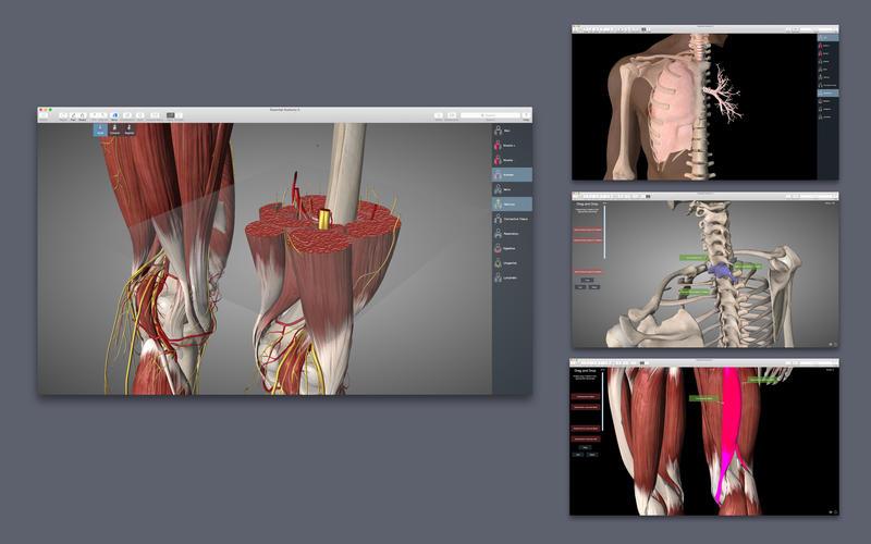 Essential Anatomy 5 Screenshots
